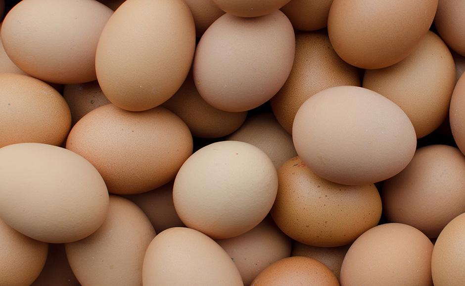Klausmann Eier: DAS Gelbe vom Ei!